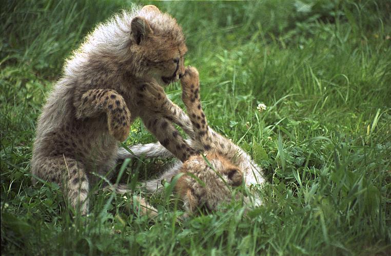 Magazín fotografie 10/2000 (topfoto), zivot v prirode/life in nature