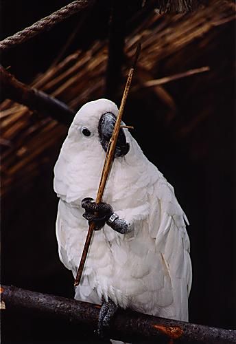 beautiful pics of parrot white cockatoo youtube